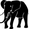 Matthias Elephant