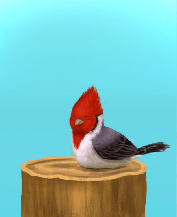 cardenal final.jpg